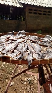 fish drying in the sun 169x300 - PSA - Eating and Drinking While Traveling in Thailand