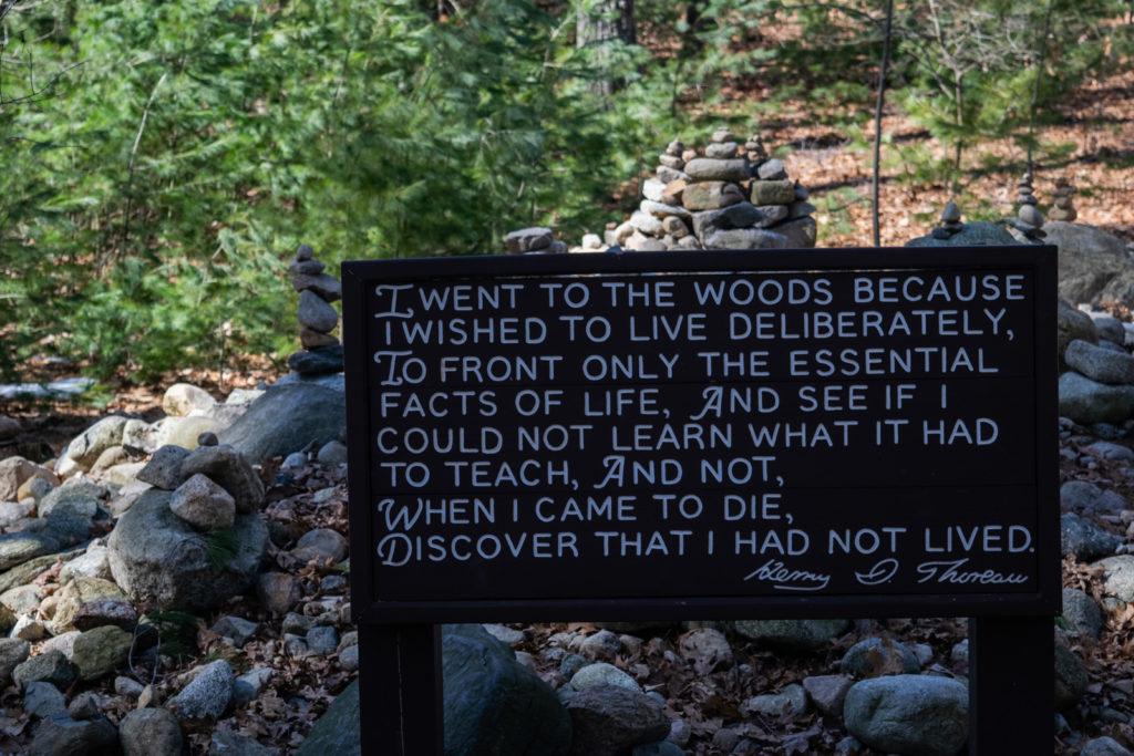 walden pond thoreau 11 1024x683 - The Nomad's Pilgrimage to Walden Pond