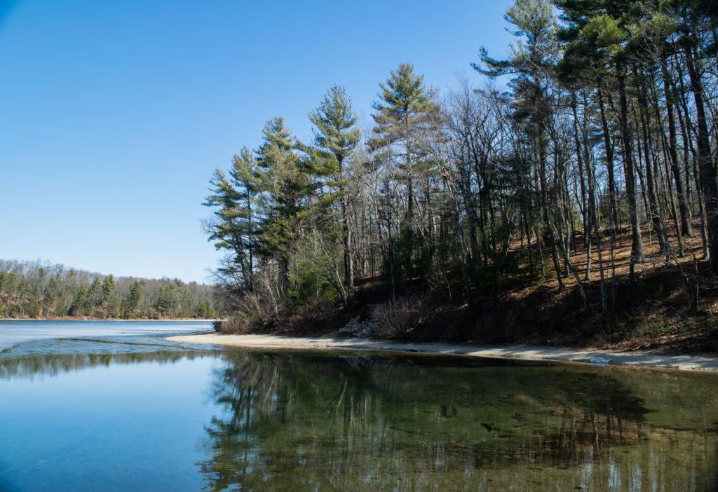 walden pond thoreau 5 1024x702 - The Nomad's Pilgrimage to Walden Pond